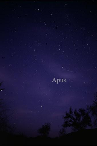 Constellation Apus
